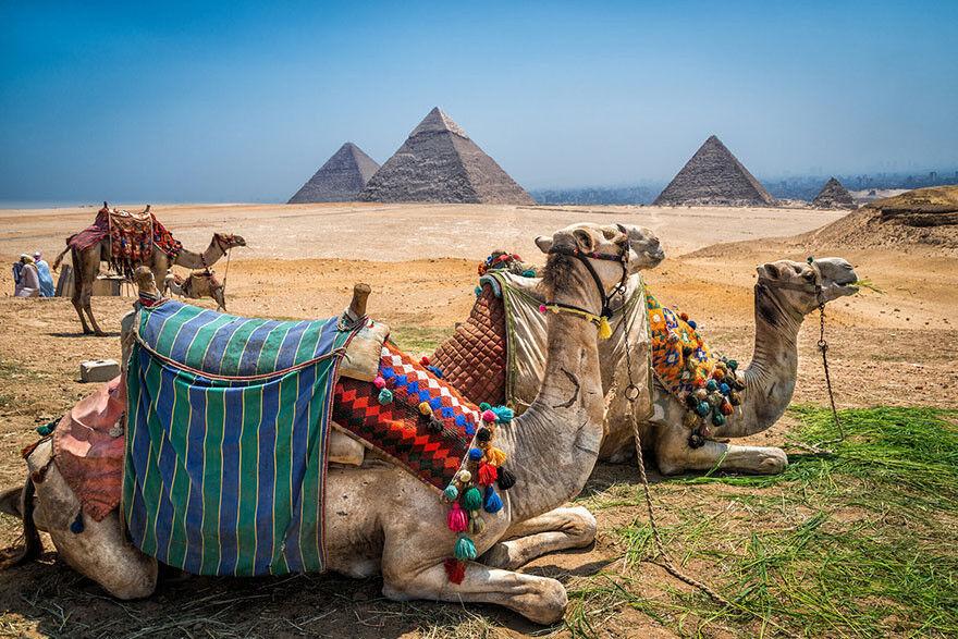 Туристическое агентство Южный край Отдых с детьми  в Египте - фото 2