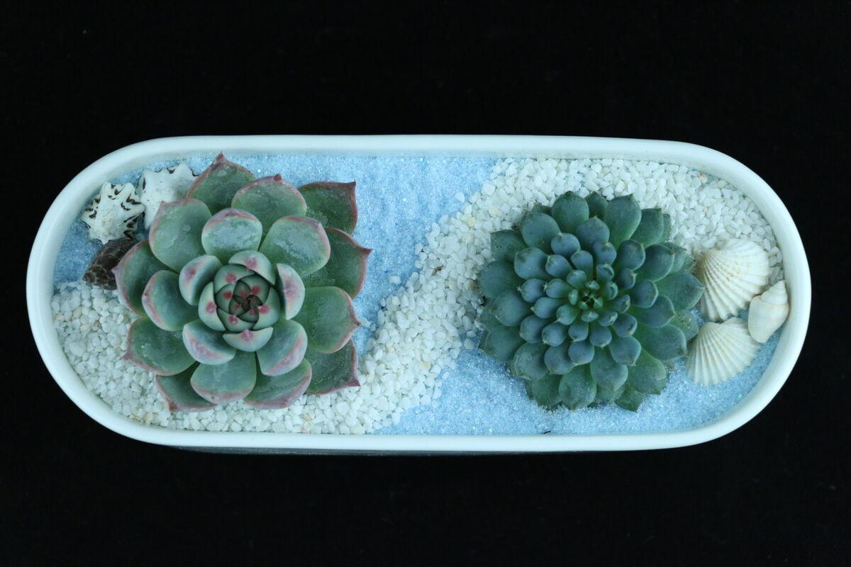 Магазин цветов Stone Rose Морская композиция в белой керамической лодочке - фото 1