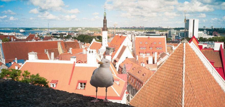 Туристическое агентство Яканата тур Экскурсионный круиз «Таллин – Стокгольм – Рига» - фото 3