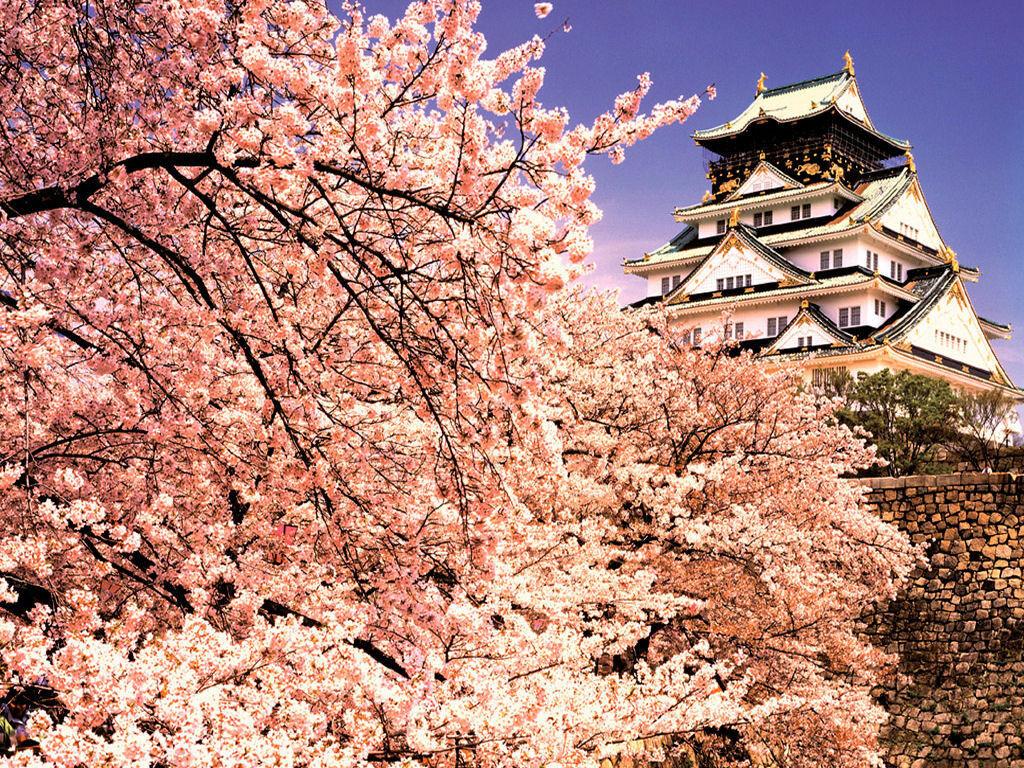 Туристическое агентство Royal Sky Завораживающая Япония + летающие горы Аватар - фото 1