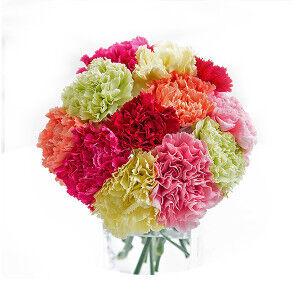 Магазин цветов Фурор Гвоздика - фото 1