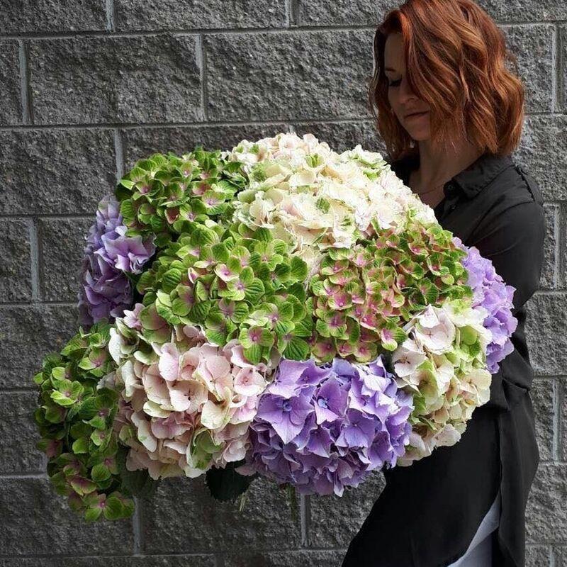 Магазин цветов Прекрасная садовница Гортензия в ассортименте разных сортов - фото 1