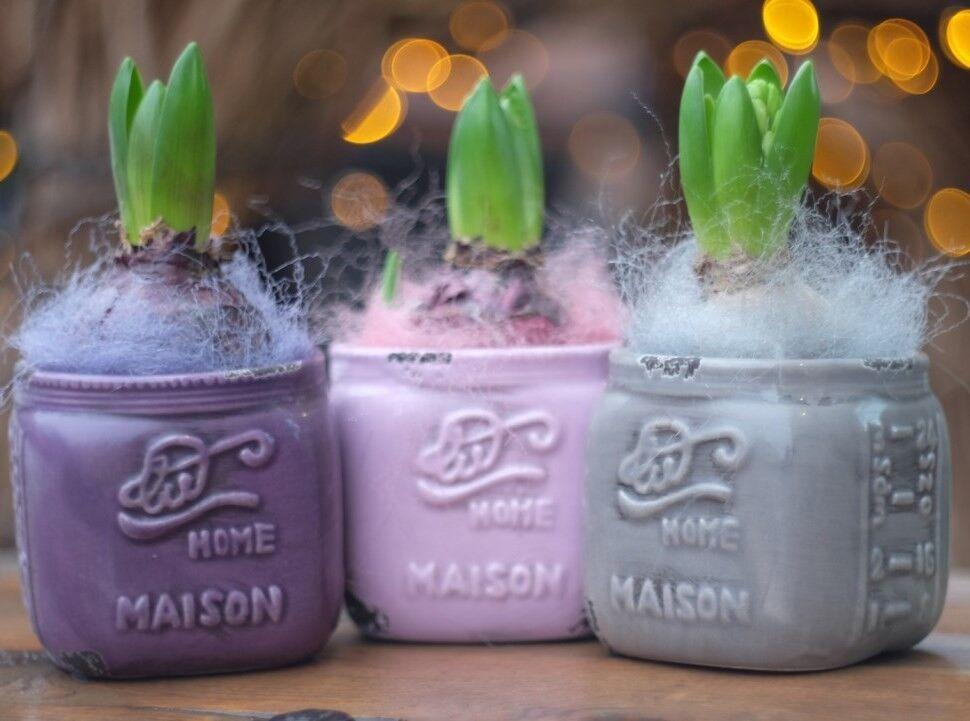 Магазин цветов VETKA-KVETKA Композиция горшечная с гиацинтами 203 - фото 1