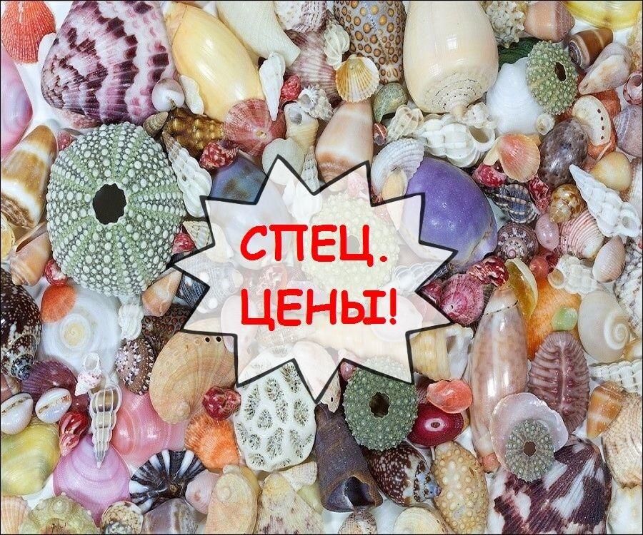Туристическое агентство Южный край Молодежный отдых в Болгарии 2018. Раннее Бронирование - фото 1