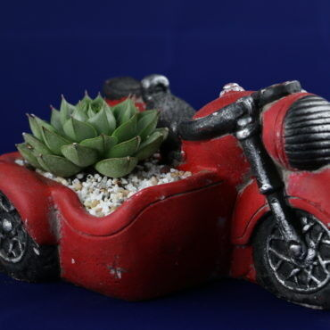 Магазин цветов Stone Rose Красный мотоцикл - фото 1