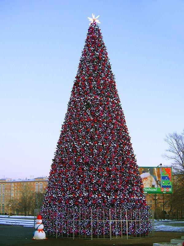 Елка и украшение GreenTrees Уличная ель «Уральская», 7м - фото 2