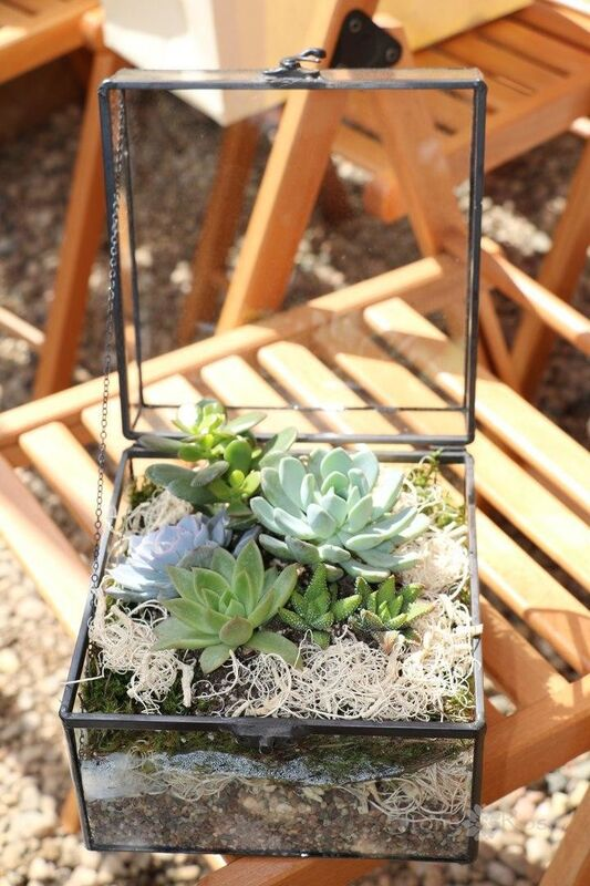 Магазин цветов Stone Rose Флорариум «Квадратный сундук» - фото 1