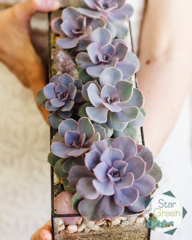 Магазин цветов StarGreen Фиолетовая феерия - фото 6