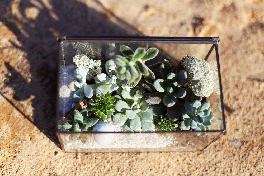 Магазин цветов Stone Rose Флорариум «Шкатулка в пустыне» - фото 1
