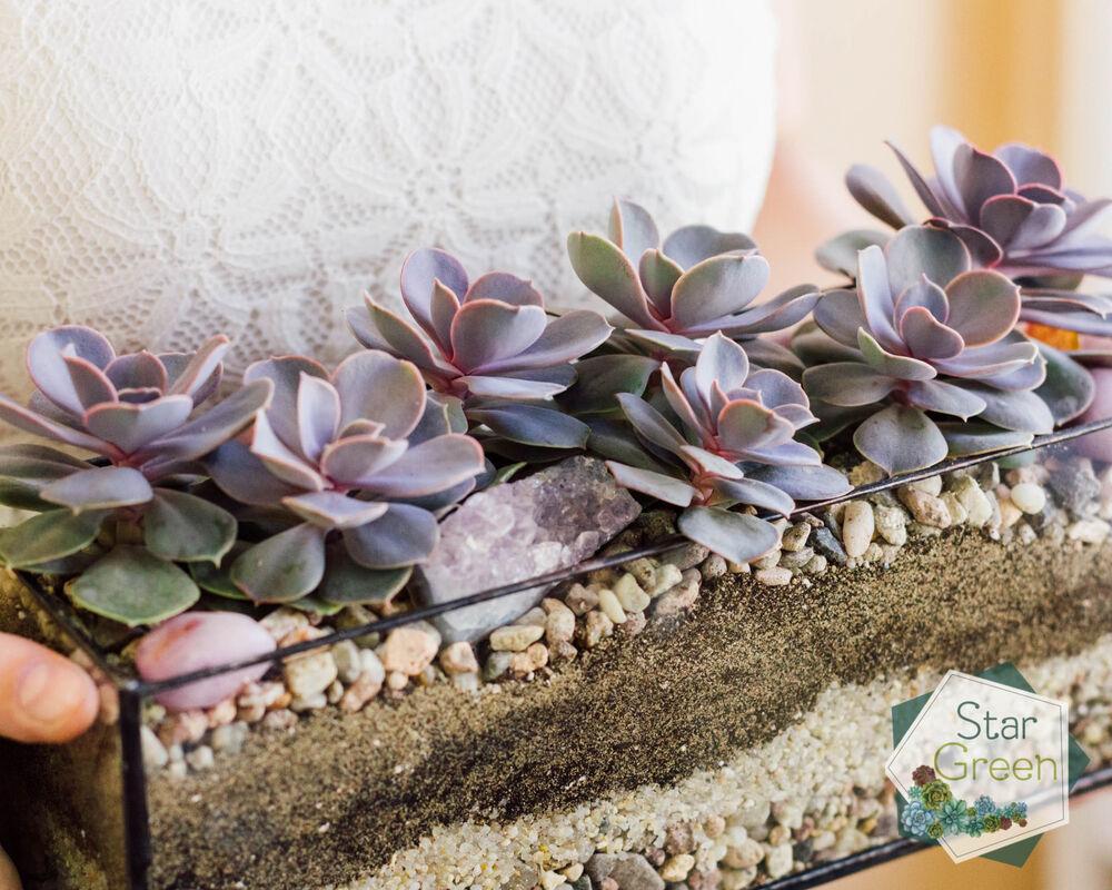 Магазин цветов StarGreen Фиолетовая феерия - фото 2