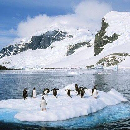 Туристическое агентство A La Carte Почувствуй Антарктику, однодневная экскурсия - фото 1