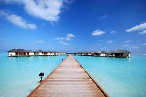 Туристическое агентство Jimmi Travel Отдых на Мальдивах, Paradise Island Resort 5* - фото 5