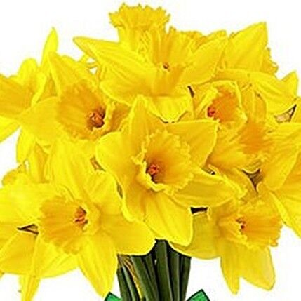 Магазин цветов Прекрасная садовница Нарцисс - фото 1