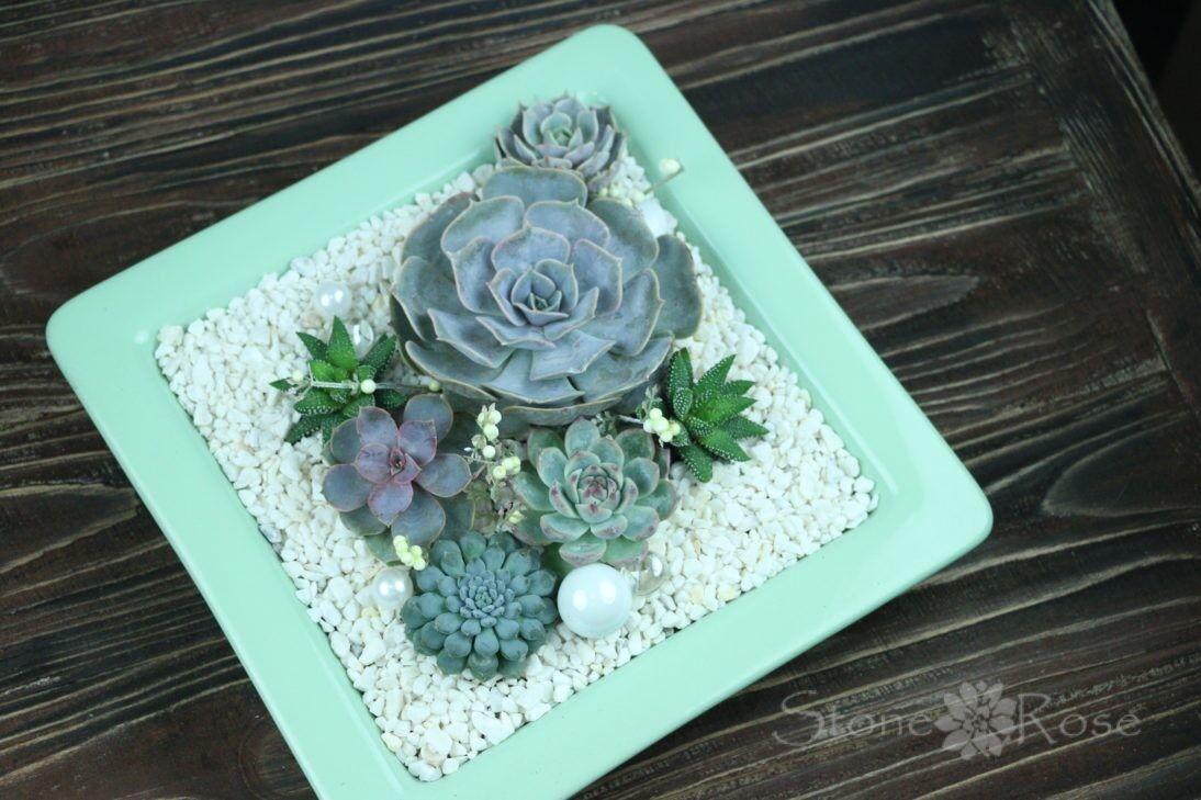 Магазин цветов Stone Rose Суккуленты в мятной тарелке - фото 1