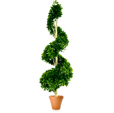 Подарок Gardenmonia Питтоспорум «Виток жизни» 441.113.60-00 - фото 1