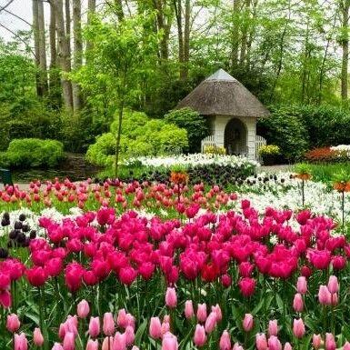 Туристическое агентство Респектор трэвел Экскурсионный автобусный тур N2 «Неизведанные Нидерланды и парад цветов Блюменкорсо» - фото 1