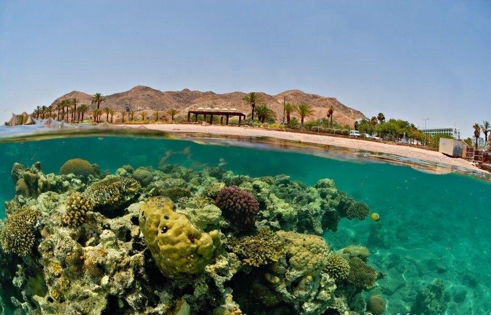 Туристическое агентство Южный край Горящий  Тур  в Египет - фото 3