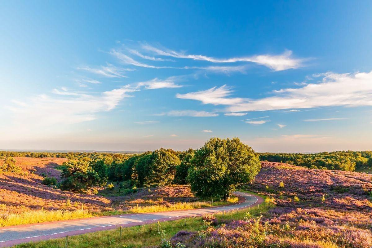 Туристическое агентство Внешинтурист Экскурсионный автобусный тур N2 «Неизведанные Нидерланды + парад цветов Блюменкорсо» - фото 4