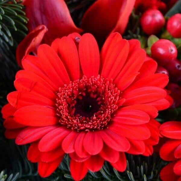 Магазин цветов Букетная Букет «Рождественское чудо» - фото 2