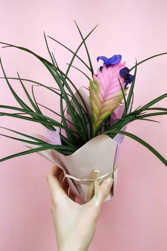 Магазин цветов Stone Rose Тилландсия Анита (Синяя) - фото 2