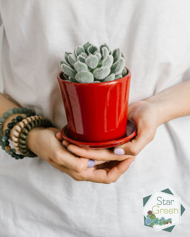 Магазин цветов StarGreen Сетоза в красном - фото 1