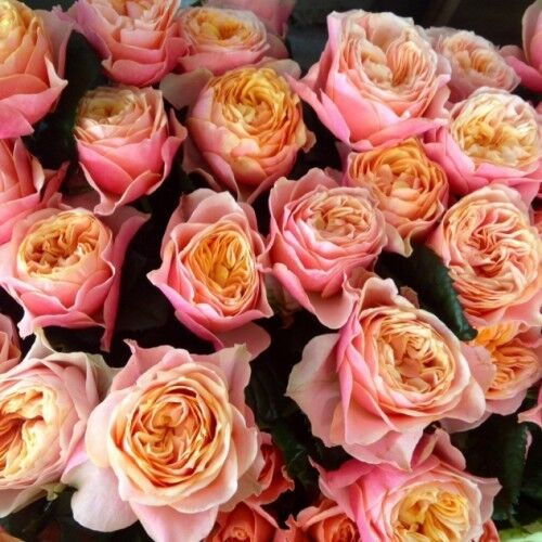 Магазин цветов VGosti.by Роза пионовидная - фото 1