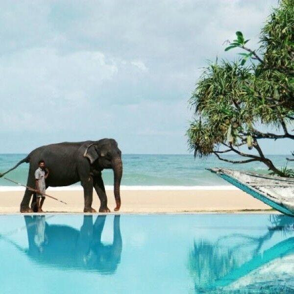 Туристическое агентство Отдых и Туризм Пляжный авиатур на Шри-Ланку, Хиккадува, Shangrela Beach Resort 2 - фото 1