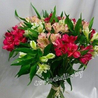 Магазин цветов Цветочник Альстромерия микс - фото 1