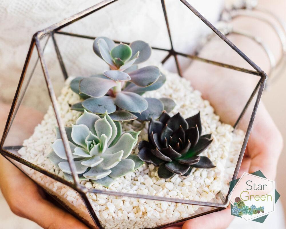 Магазин цветов StarGreen Три каменные розы - фото 3