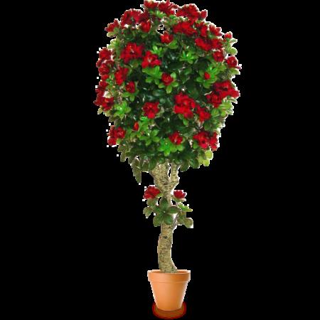 Подарок Gardenmonia Азалия топиарий 441.219.10-00 - фото 1