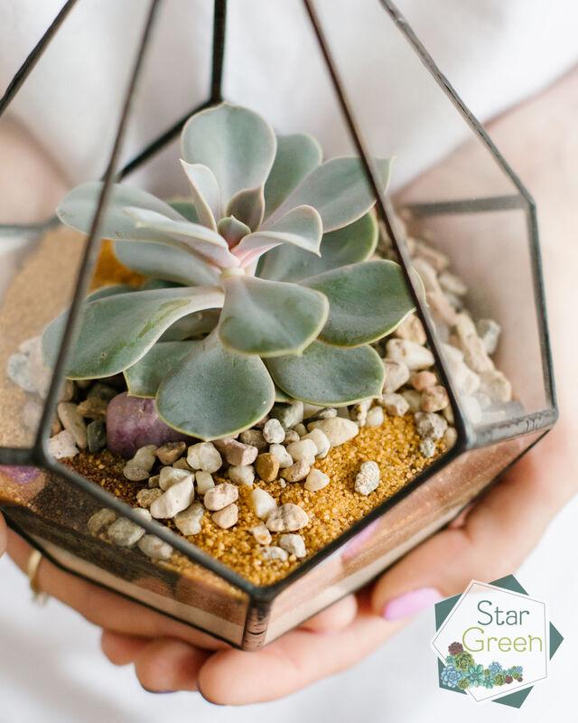 Магазин цветов StarGreen Жемчужина в капле - фото 2