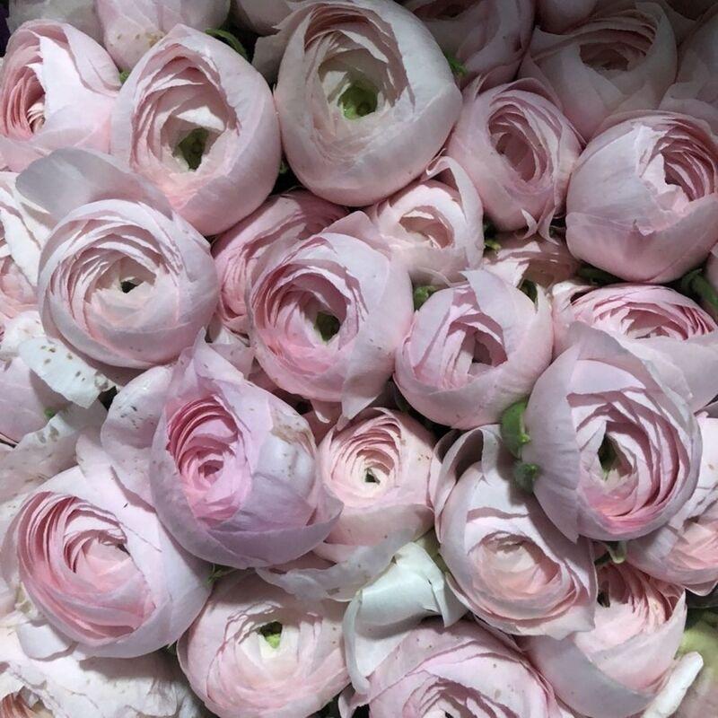 Магазин цветов Прекрасная садовница Ранункулюс (лютик) - фото 1