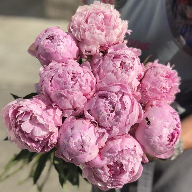 Магазин цветов Прекрасная садовница Пион Сара Бернар - фото 1