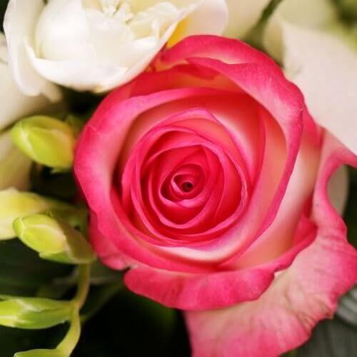 Цветы в подарок минск сливки — img 13