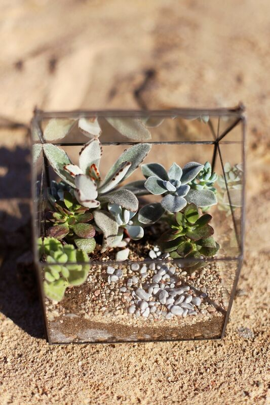 Магазин цветов Stone Rose Флорариум с суккулентами «Пустынный домик» - фото 1