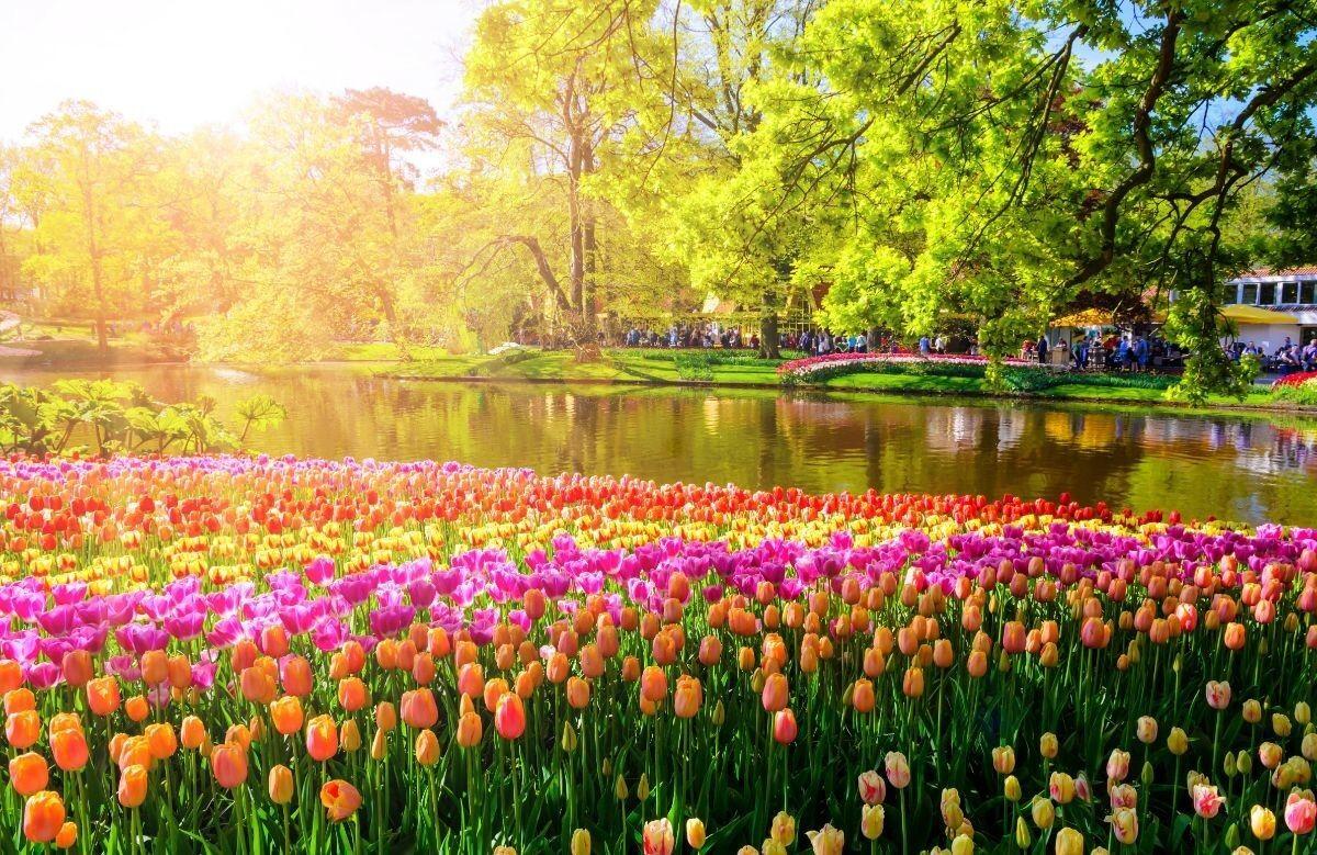 Туристическое агентство Внешинтурист Экскурсионный автобусный тур N2 «Неизведанные Нидерланды + парад цветов Блюменкорсо» - фото 2