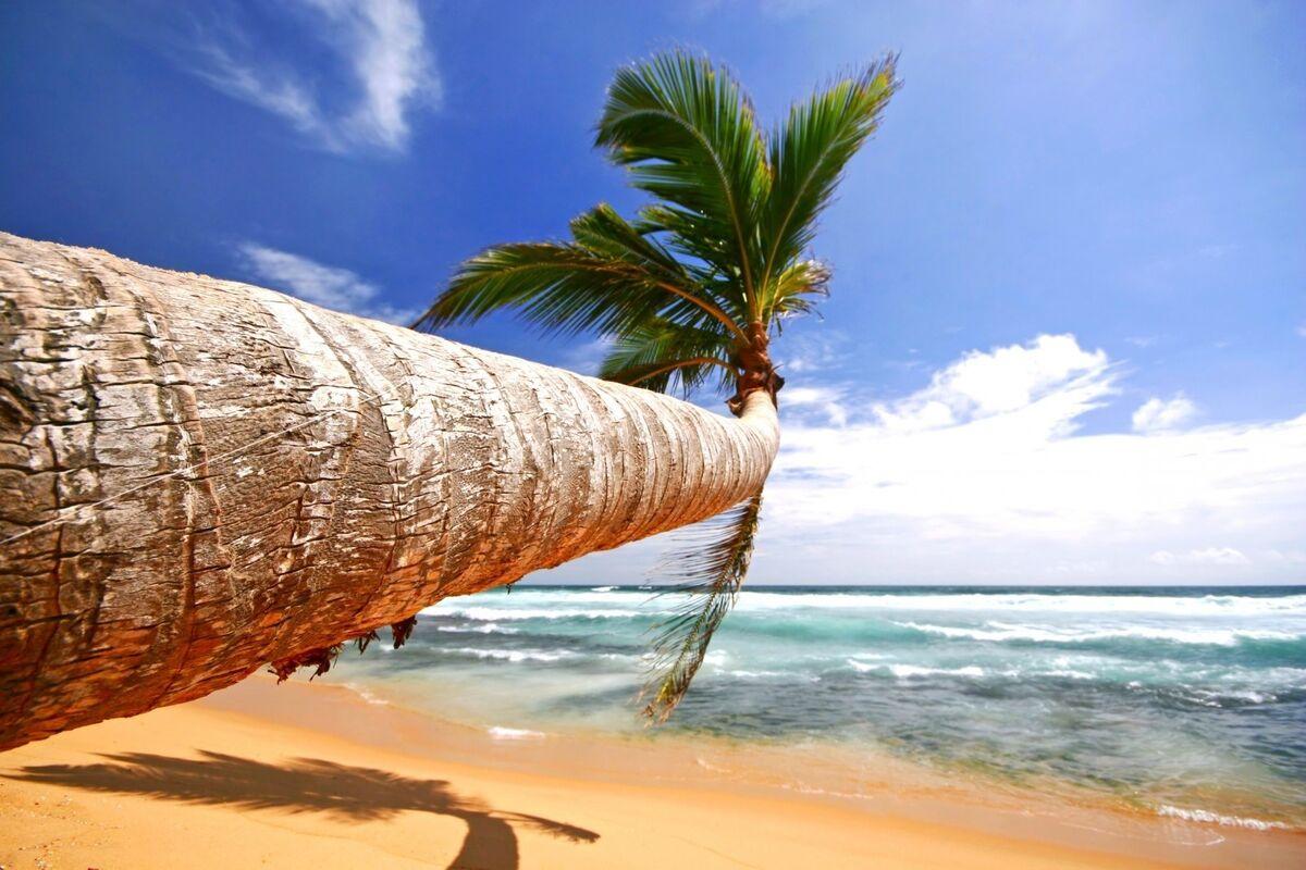 Туристическое агентство Южный край Пляжный тур на Шри-Ланку - фото 2