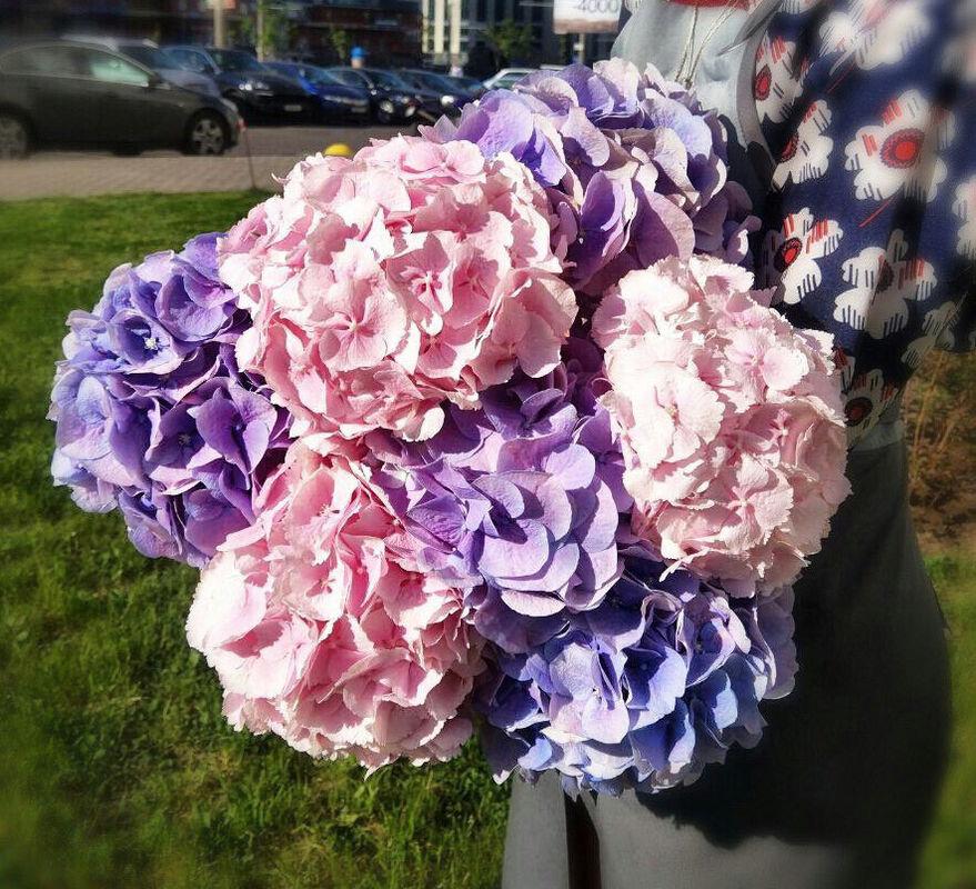 Магазин цветов Прекрасная садовница Гортензия в ассортименте разных сортов - фото 2