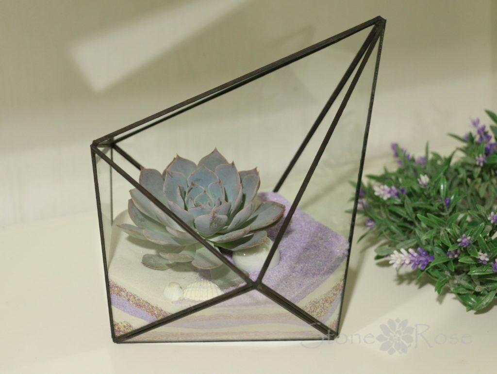 Магазин цветов Stone Rose Эхеверия во флорариуме 5-тигранном - фото 1