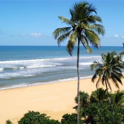 Туристическое агентство Мастер ВГ тур Пляжный тур на Шри-Ланку - фото 1