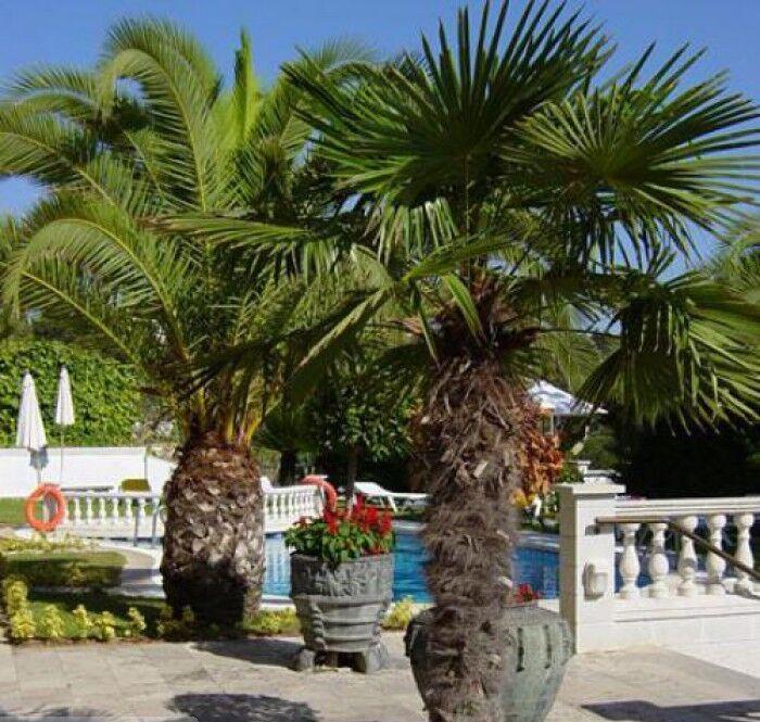 Туристическое агентство Санни Дэйс Пляжный авиатур в Испанию, Коста Брава, Bonsol 2* - фото 4