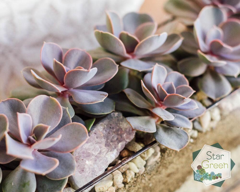 Магазин цветов StarGreen Фиолетовая феерия - фото 5