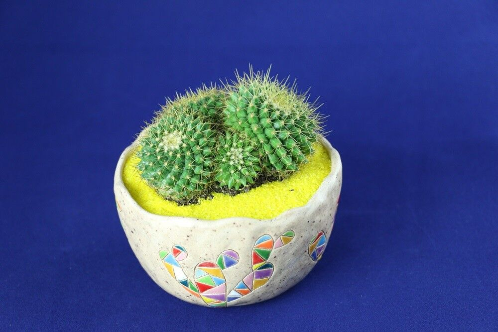 Магазин цветов Stone Rose Кактус в керамическом горшке «Мексика» - фото 1