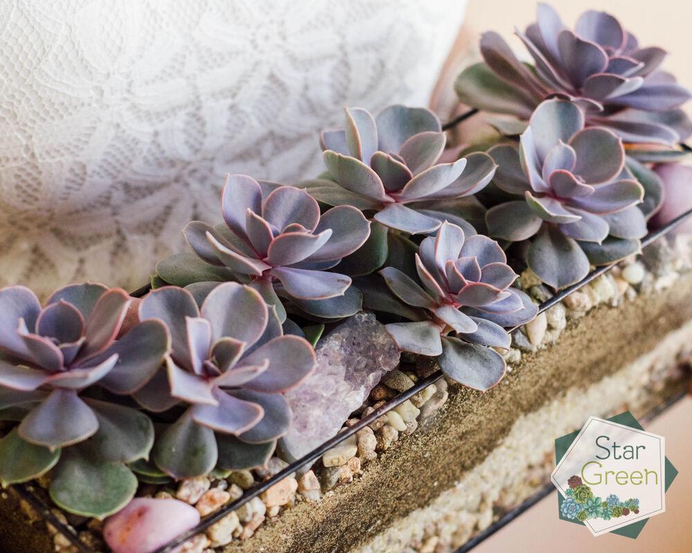 Магазин цветов StarGreen Фиолетовая феерия - фото 3
