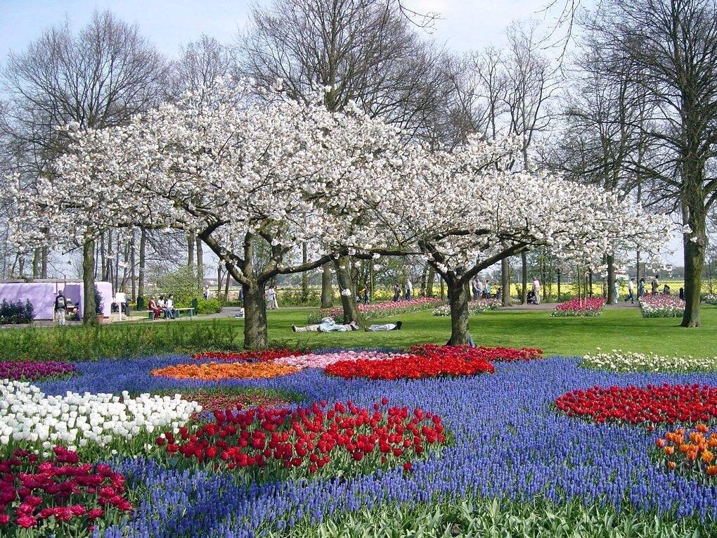 Туристическое агентство ТрейдВояж Экскурсионный автобусный тур в Нидерланды NLD B02 - фото 3