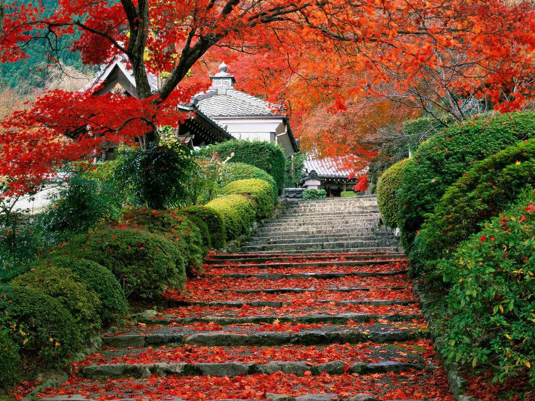Туристическое агентство Royal Sky Завораживающая Япония + летающие горы Аватар - фото 12