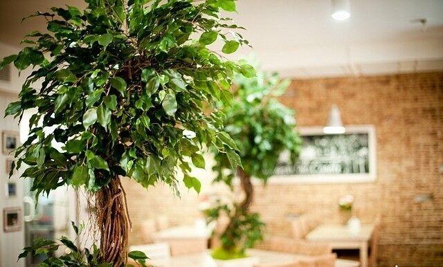 Ресторан и кафе на Новый год Бейкери дю солей Зал общий - фото 4