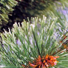 Елка и украшение GreenTerra Сосна «Диана» с расщепленными концами, 2.2 м - фото 2