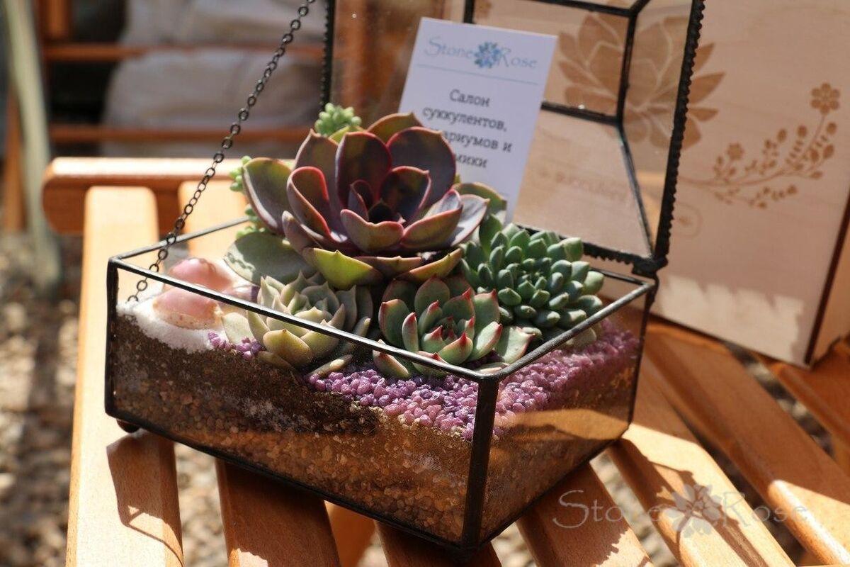 Магазин цветов Stone Rose Флорариум «Прямоугольный сундук» - фото 1