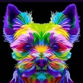 GROOMING DOG STUDIO (Груминг дог студия) - фото